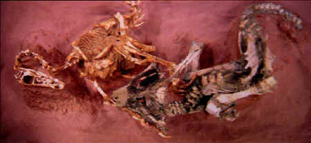 an analysis of the discovery of velociraptors fossils Velociraptor was a type of dinosaur that could grow to about 68 feet in length   analysis of the protoceratops remains showed that the raptor did not kill  on  august 1923, peter kaisen discovered the first velociraptor fossil.